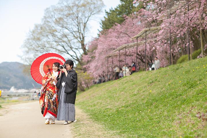 春 京都好日 桜